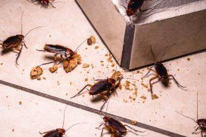 Cockroach Control - Pest2Kill